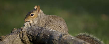 tree squirrel that is eating so fast food is flying