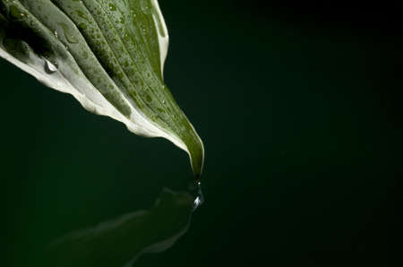 leaf that is touching the water and covered in moisture Stock fotó