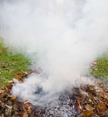 smoldering: fall leaves burning and billowing up a thick smoke screen