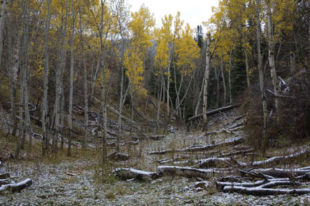 snow clearing: Clearing in the mountains with snow surrounded by aspens Stock Photo