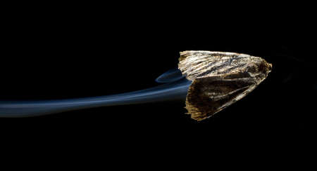 strobist: Moth that appears to be flying fast enough to generate a contrail Stock Photo