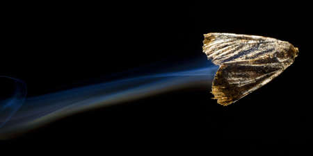 strobist: Moth that appears to be going so fast it has a contrail