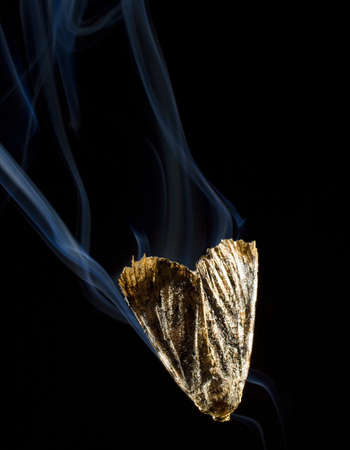 flame like: Moth that looks like it got too close to a candle flame