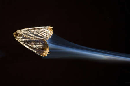 strobist: Moth that looks like its going so fast that theres a contrail