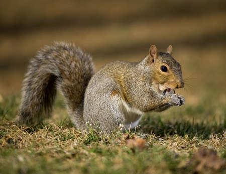 Tree squirrel with sunflower seed shells flying out of its mouth
