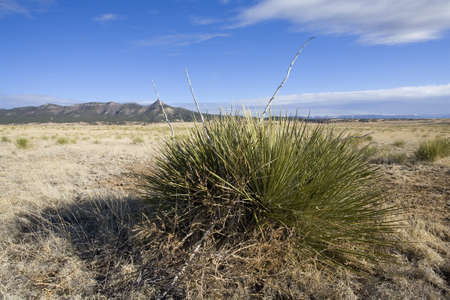 High altitude plain with grass and century plants nearby photo