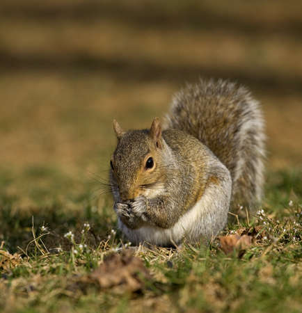 Tree squirrel that looks like it is coming up with a plan Stock Photo