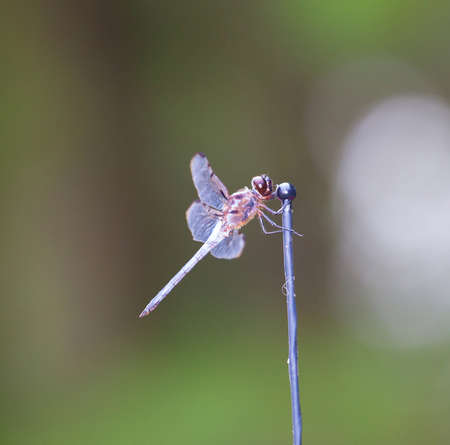 antenna dragonfly: Dragonfly that is hugging the end of an antenna Stock Photo