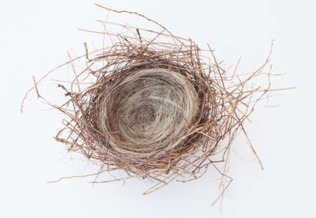Very small bird nest with pine needles and horse hair Imagens