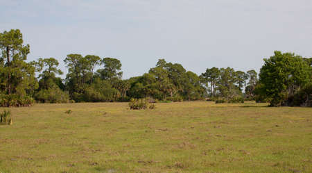 ranching: Lush and green field for ranching in Florida Stock Photo