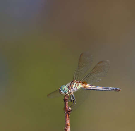 dumps: Dragonfly that looks like it is down in the dumps