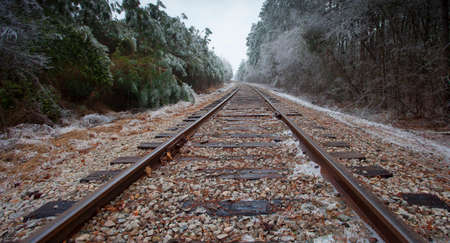 black and white railroad tracks: Old railroad tracks passing through a forest after an ice storm