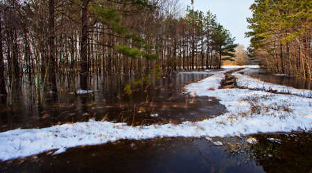 north woods: Line of woods in North Carolina with snow and water and ice