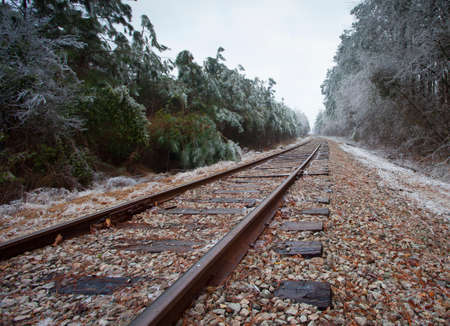 wood railroads: Railroad tracks through a pine forest covered in ice