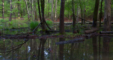 flooded: Woody area that has been flooded with shallow water
