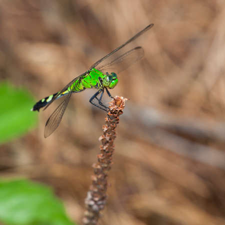 smirk: Green dragonfly on a stick that almost has a smirk on its face