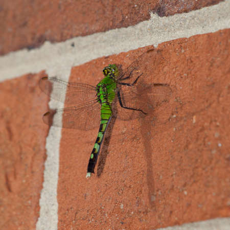 landed: Green dragonfly that has landed on a brick wall