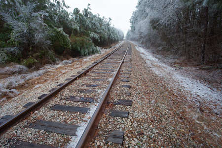 forest railroad: Railroad track that is going through a frozen forest