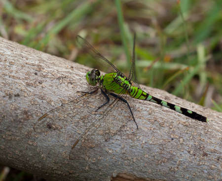 neon green: Neon green dragonfly that is sitting on some wood