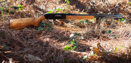 twenty two: Rifle that chambers twenty two rimfire in a forest Stock Photo