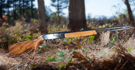 semi automatic: Semi automatic rifle for twenty two ammunition in a forest
