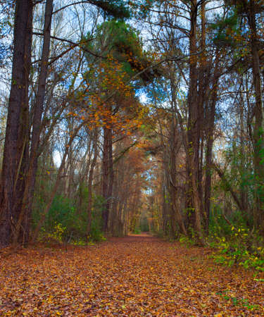 late fall: Trail running through a thick forest in North Carolina in late fall