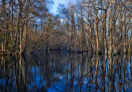Lumber River in North Carolina with trees in the water Imagens