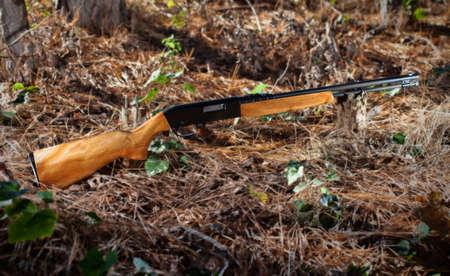 stocked: Wood stocked rifle chambered in twenty two rimfire in the forest