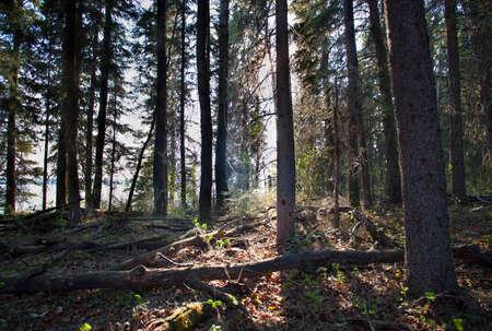 saskatchewan: Light starting to reach into a forest in Saskatchewan Canada