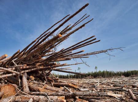 saskatchewan: Piles of trees that have been cut in a remote region of Saskatchewan Canada