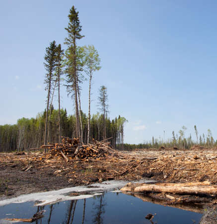 saskatchewan: Puddle in a forest clear cut in Saskatchewan Canada