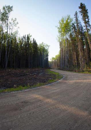 saskatchewan: Dirt road that is winding through a forest in Saskatchewan Canada
