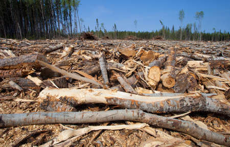 saskatchewan: Clear cut in Saskatchewan Canada with a few trees standing behind Stock Photo