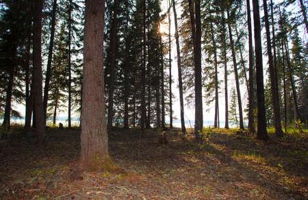saskatchewan: Sun finally reaching into a shoreline forest in Saskatchewan Canada