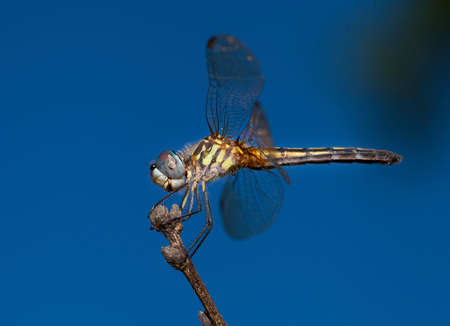 feelers: Dragonfly on a stock that is looking for a bug to eat Stock Photo