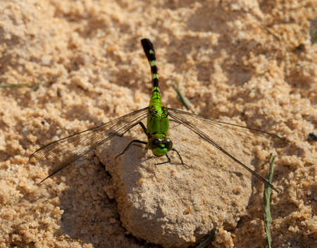 landed: Green dragonfly that has landed on some sand