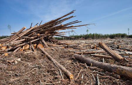 clearing: Timber that has been piled up in a clearing in Canada Stock Photo