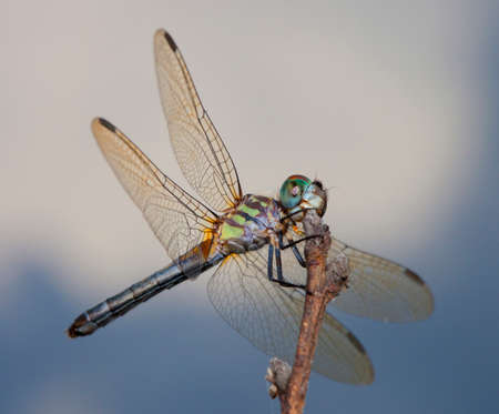 Multi colored dragonfly on a stick with sky and clouds behind