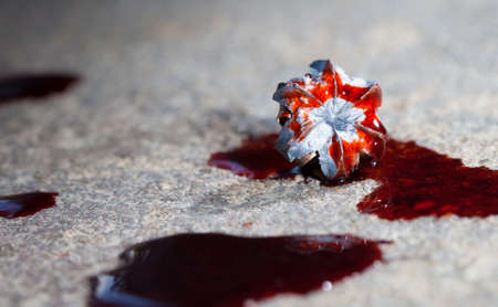 expanded: Expanded lead hollow point bullet with blood on the concrete