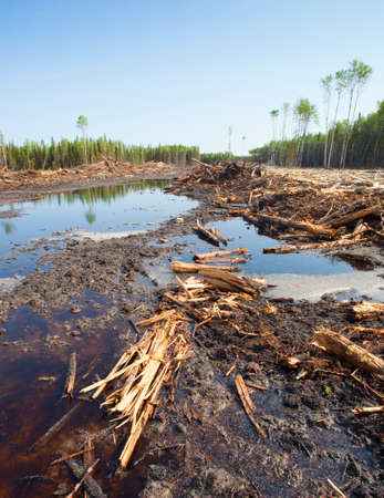 extensively: Forest that has been cut extensively in a logging operation in Saskatchewan Canada