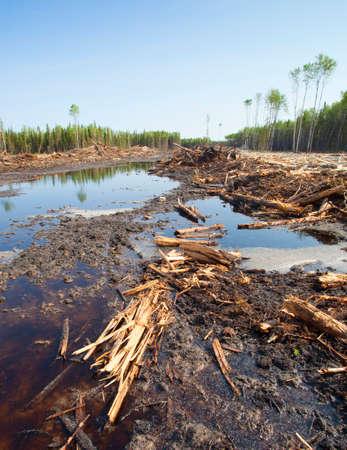 saskatchewan: Forest that has been cut extensively in a logging operation in Saskatchewan Canada