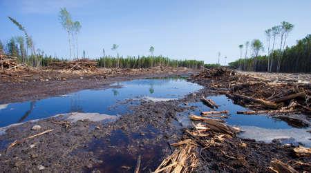 saskatchewan: Saskatchewan Canada forest that has been cleared by logging