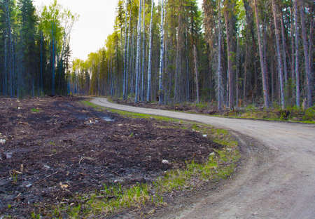 saskatchewan: Dirt road in the thick forest in Saskatchewan Canada Stock Photo