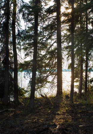 saskatchewan: Fingers of light slipping into a forest in Saskatchewan Canada