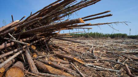 saskatchewan: Piles of logs after a crew got done in a forest in Saskatchewan Canada Stock Photo