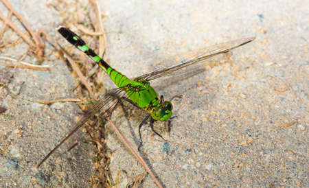 antenna dragonfly: Green dragonfly that is sitting on some sand set bricks Stock Photo