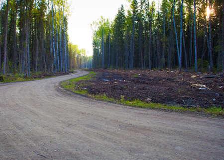 saskatchewan: Sun starting to peek through the trees on a road in Saskatchewan Canada