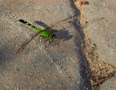 landed: Dragonfly that has landed on some sand set bricks Stock Photo
