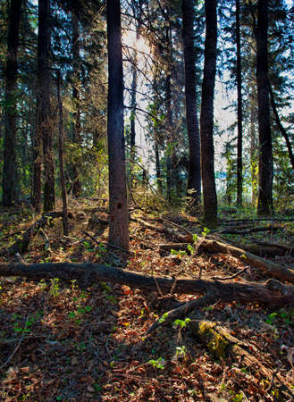 View from the thick forest at Dore Lake Saskatchewan Stock Photo