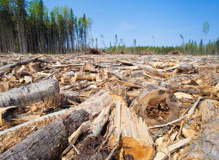 Veel bomen in een houtkap in Saskatchewan Stockfoto
